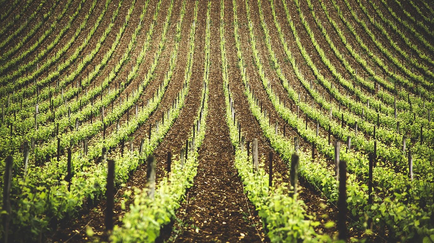 Richebourg vineyard bourgogne